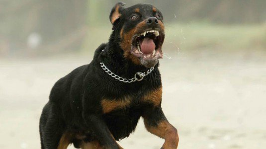 Rottweiler aggredisce coppia gay a Parma